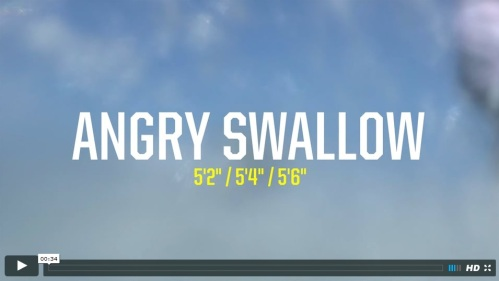 video angry swallow